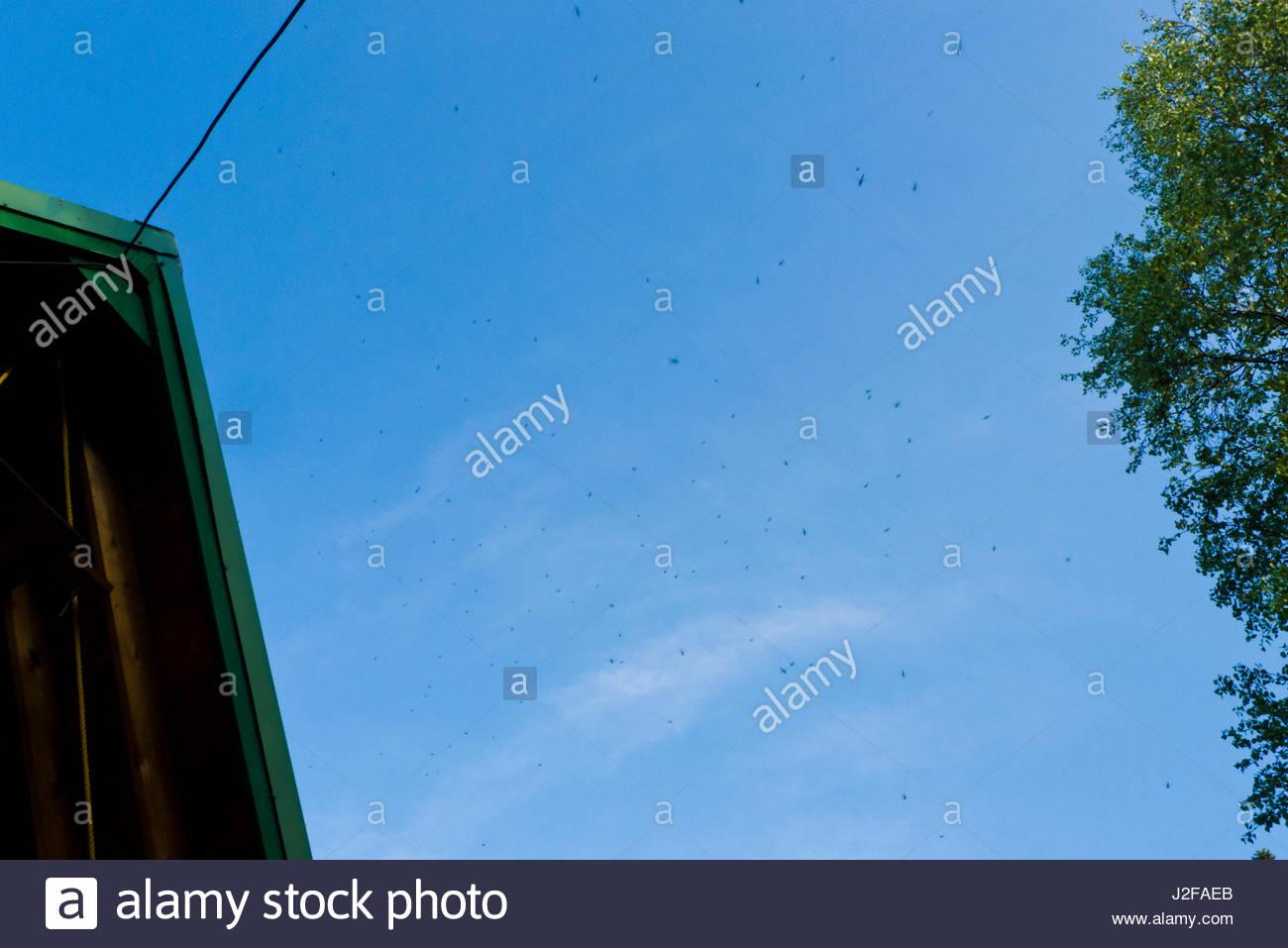 Alaska matanuska susitna county talkeetna - Cloud Of Mosquitoes In The Blue Sky Talkeetna Mountains Matanuska Susitna Borough