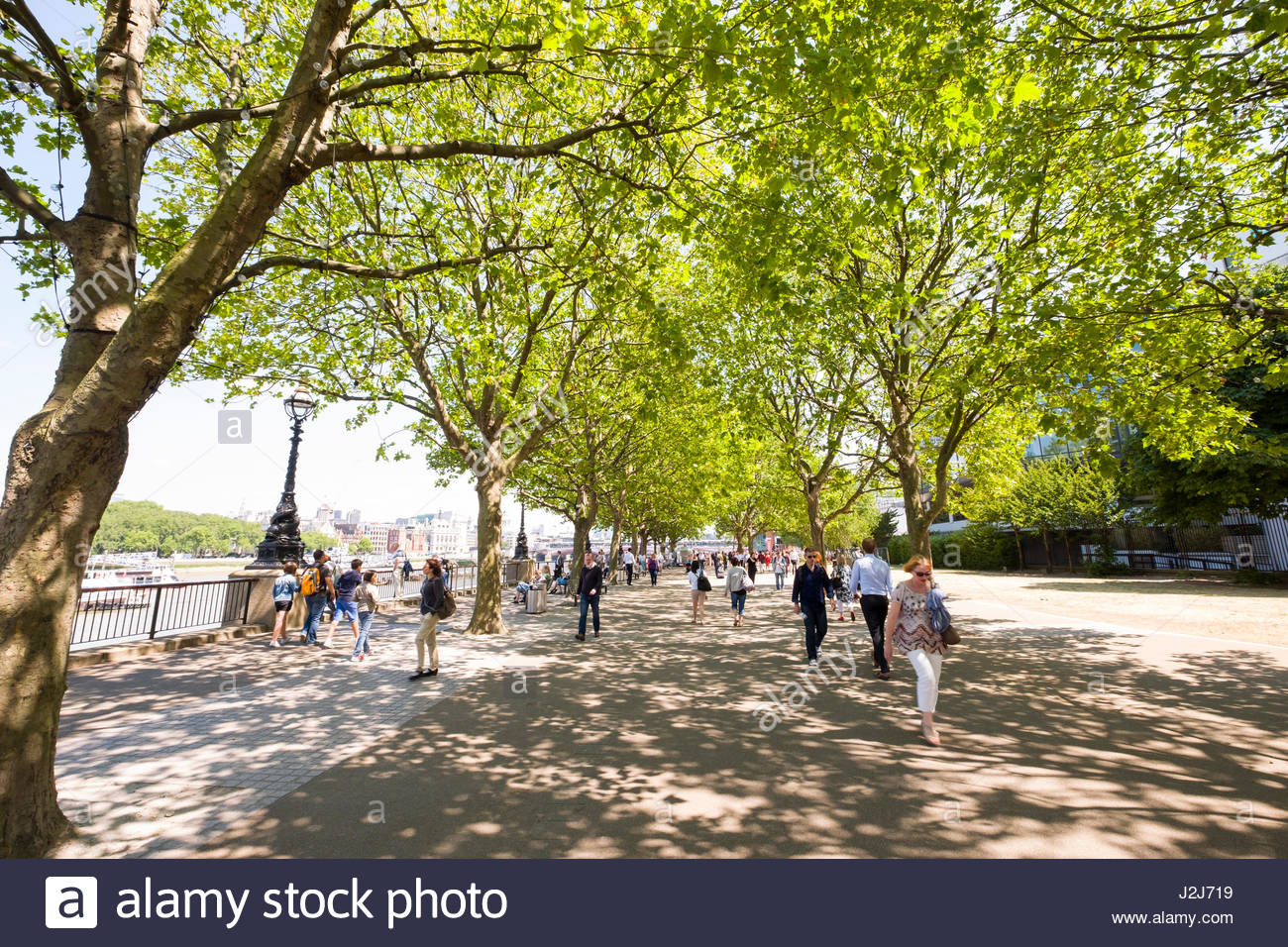 London Plane Trees providing shade to people walking on the