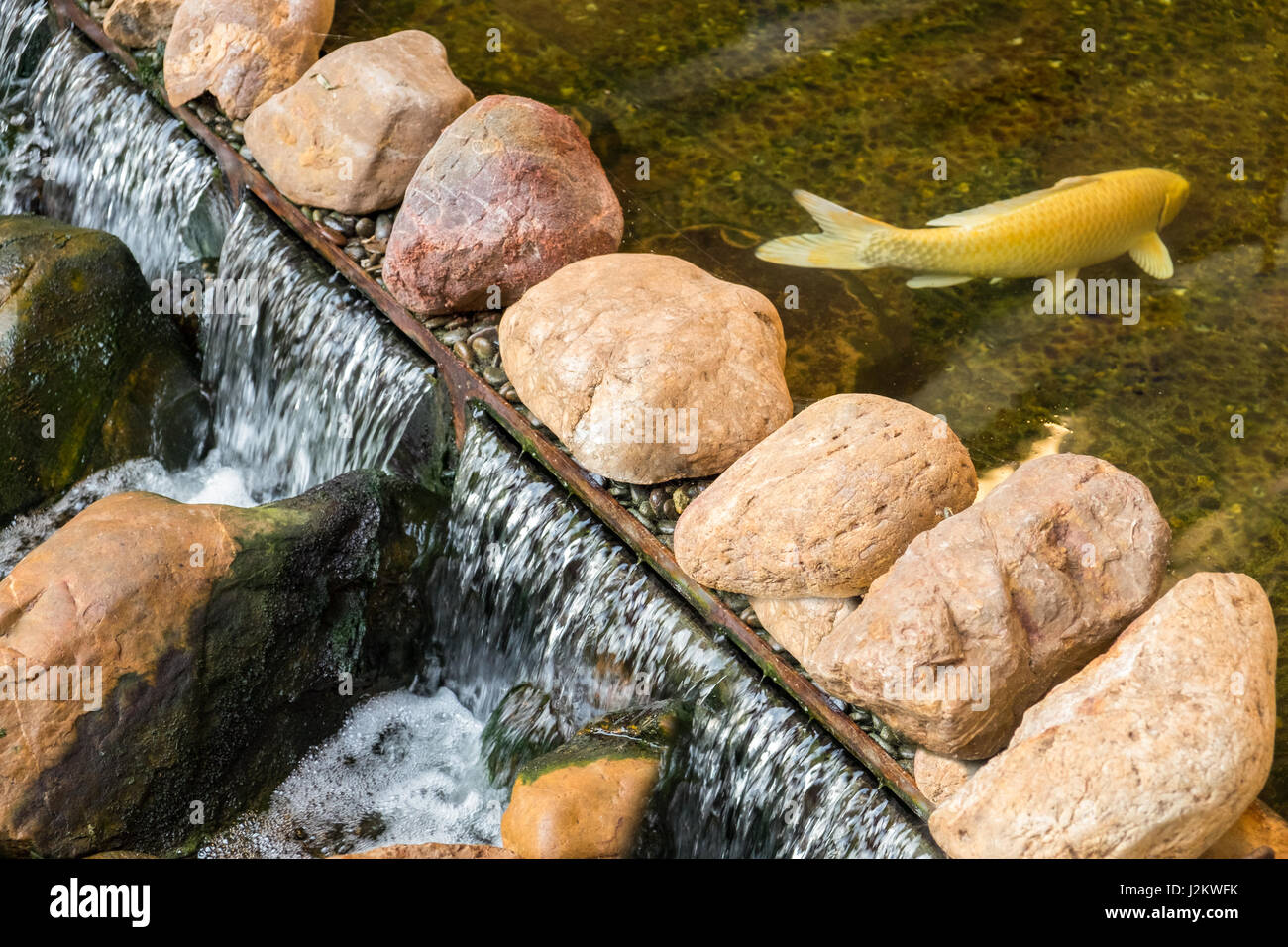 Koi carp in a lake stock photos koi carp in a lake stock for Stone koi pond