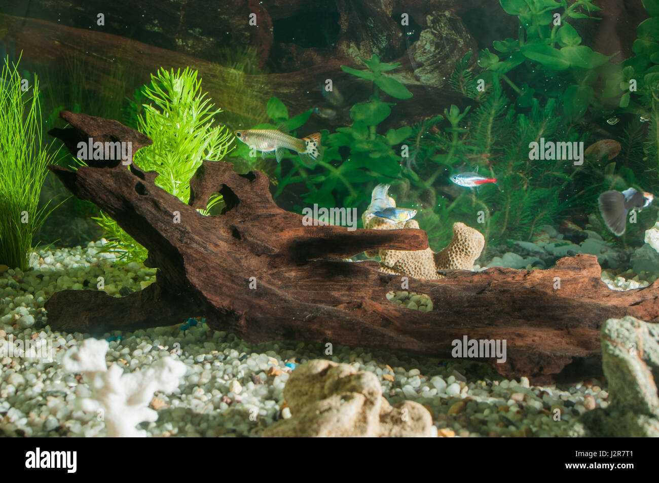 Freshwater aquarium fish cape town - Aquarium With Many Fish And Natural Plants And Sand Tropical Fishes Aquarium With Green