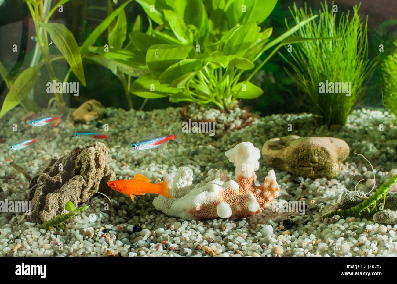 Fish for natural aquarium - Aquarium With Many Fish And Natural Plants And Sand Tropical Fishes Aquarium With Green