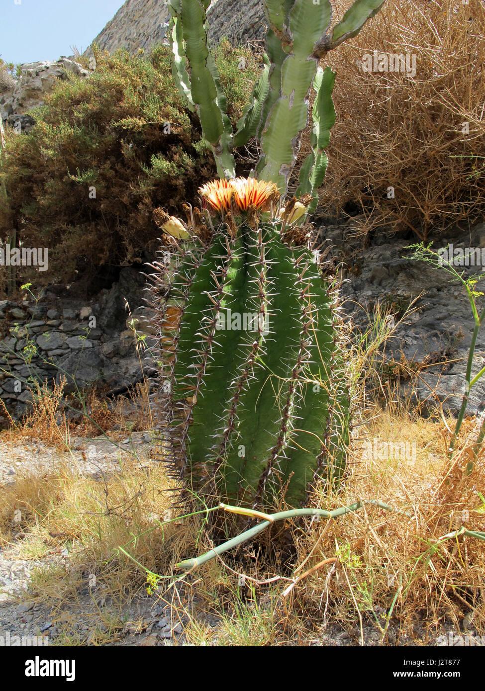 Sexi stock photos sexi stock images alamy for Jardineras de cactus