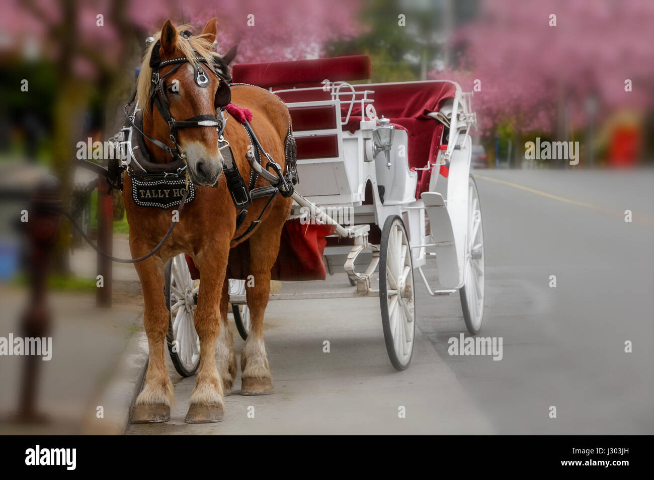 Horse And Carriage Victoria Stock Photos Amp Horse And
