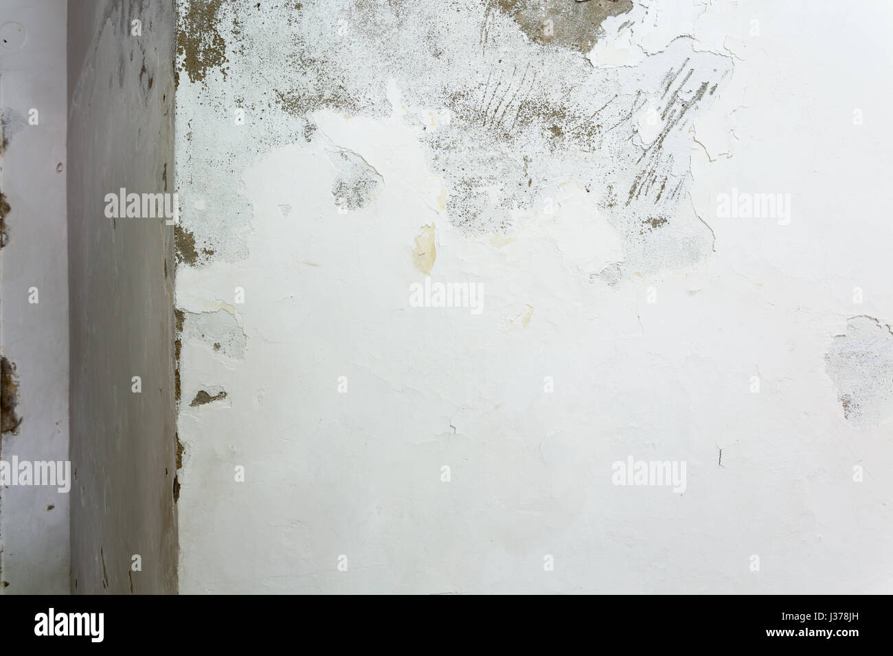 rising damp stock photos rising damp stock images alamy. Black Bedroom Furniture Sets. Home Design Ideas