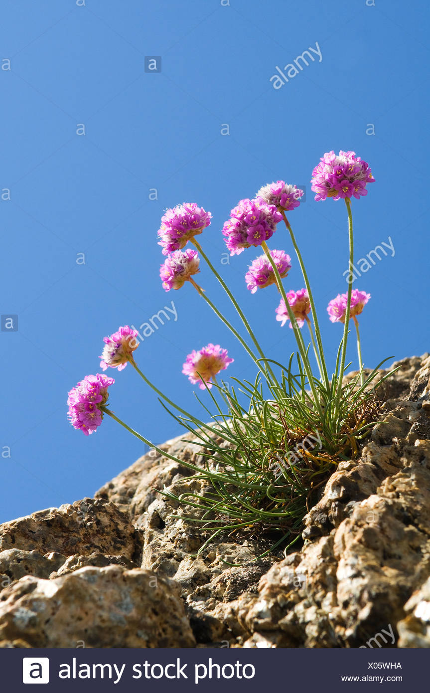 Low Angle View Of Beautiful Flowers Against Clear Blue Sky Stock