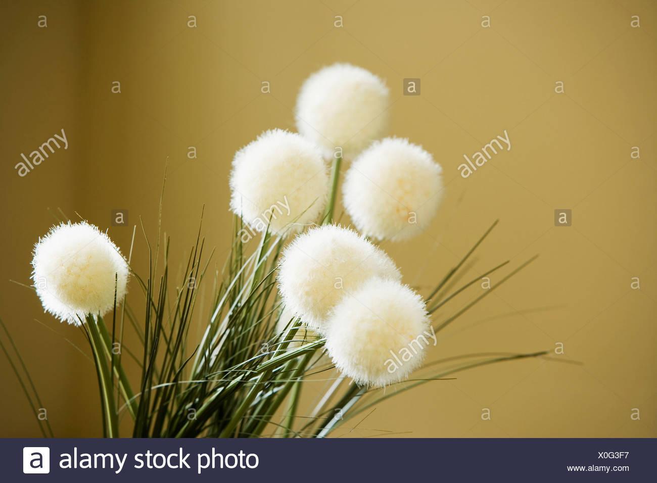 Puffy white flowers stock photo 275719899 alamy puffy white flowers mightylinksfo