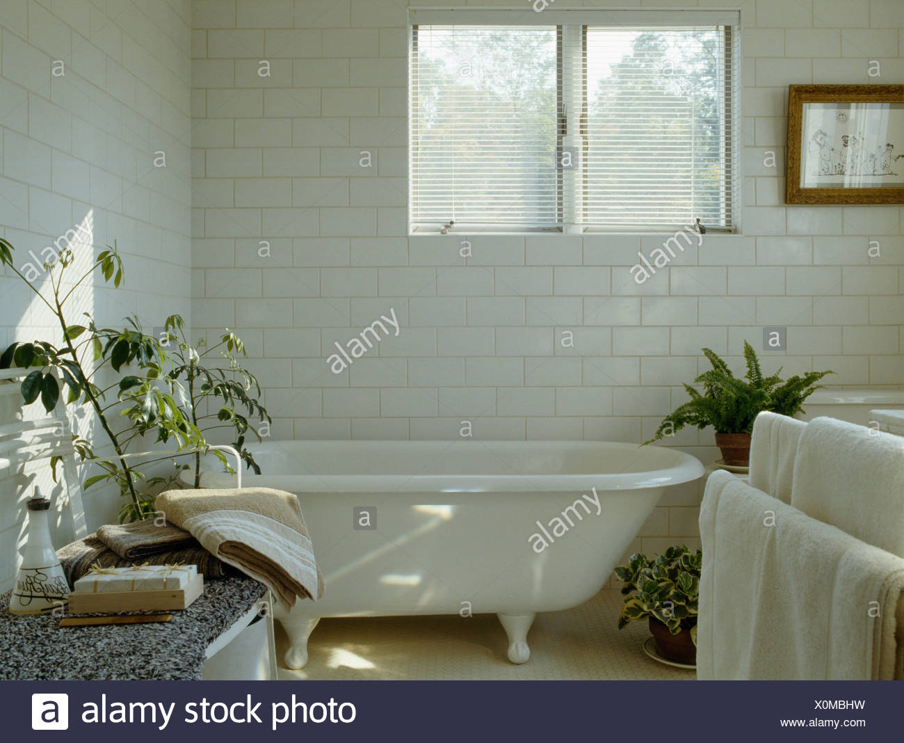 Roll- top bath below window in white country bathroom with white ...