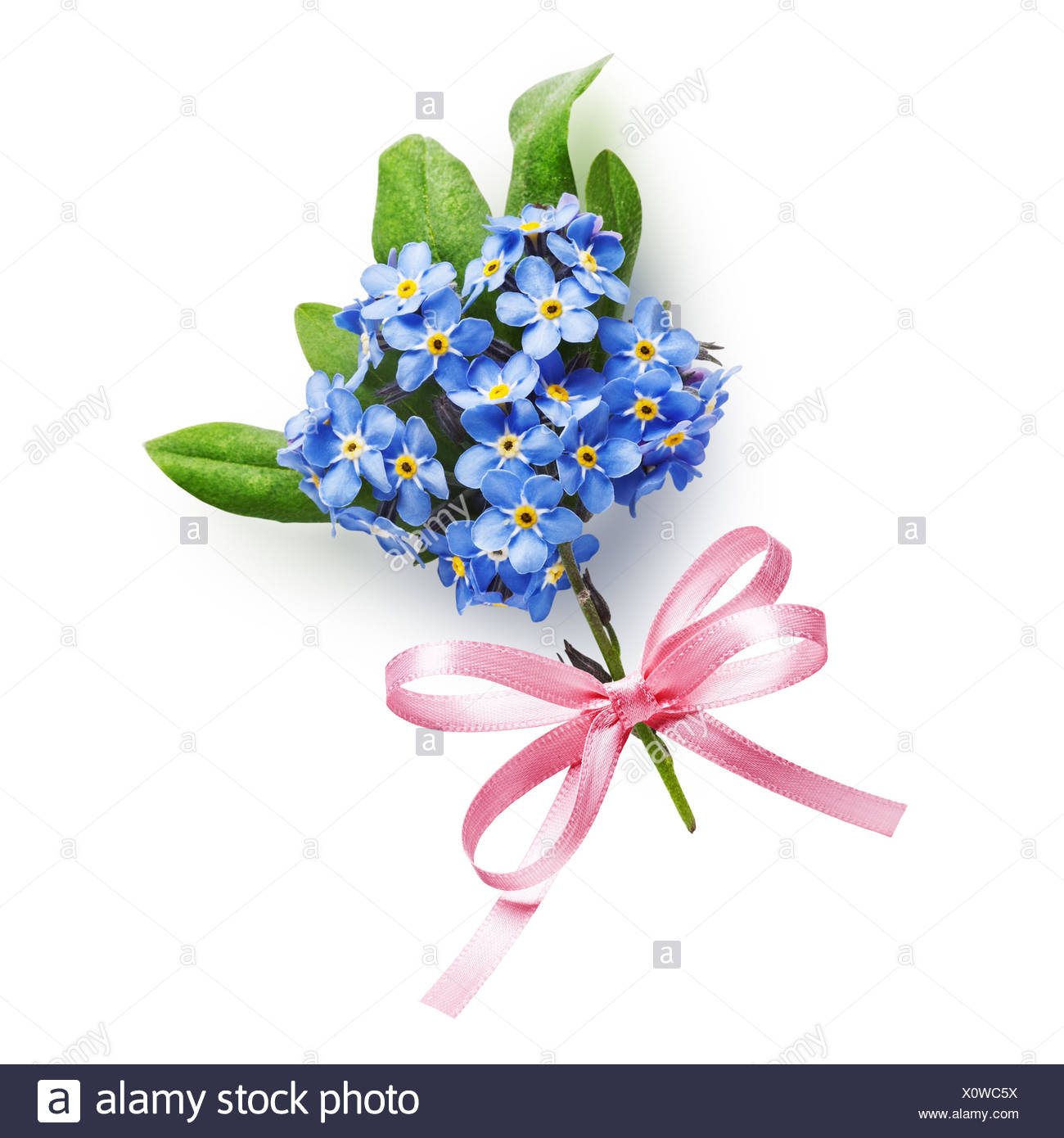 Bunch Of Small Blue Forget Me Not Flowers With Pink Bow Ribbon