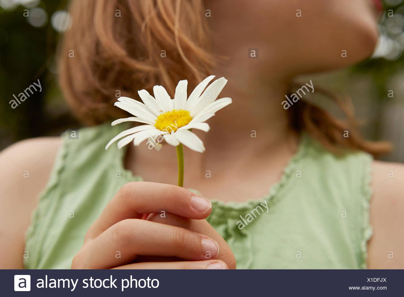 Cropped Image Of Girl Holding Daisy Flower Stock Photo 276278210