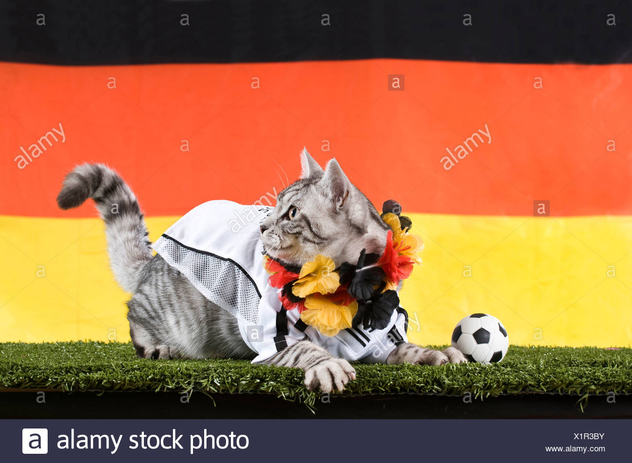 96480d36d Domestic Cat. Tabby adult dressed in the jersey of the German National  Football Team with football and garland in the Germen nat