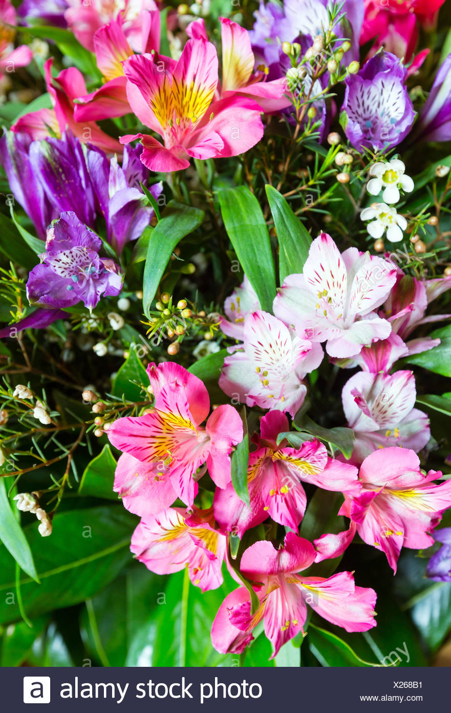 Big multicolor alstroemeria flowers bouquet stock photo 276733493 big multicolor alstroemeria flowers bouquet izmirmasajfo