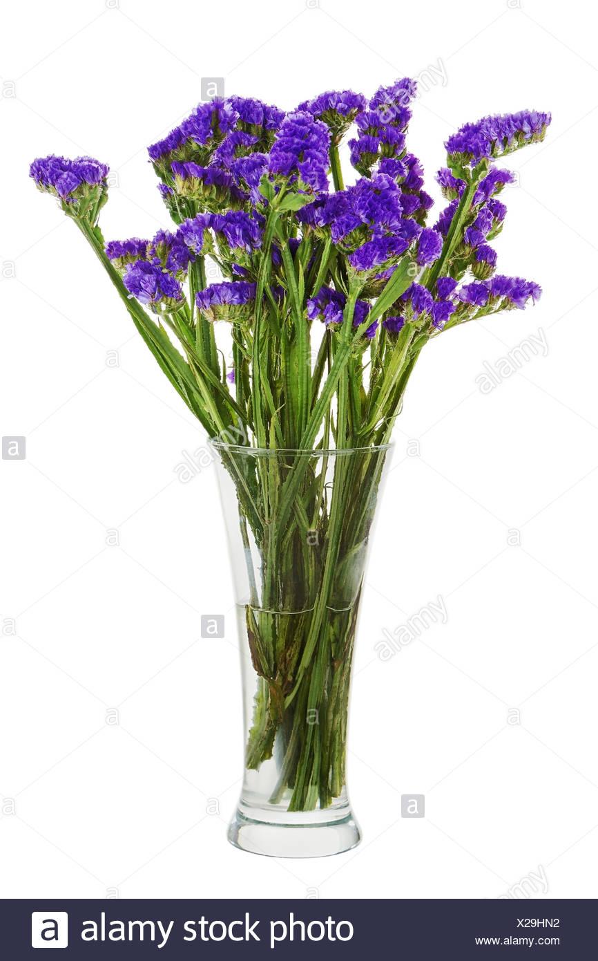 Bouquet from statice flowers arrangement centerpiece in vase bouquet from statice flowers arrangement centerpiece in vase isolated on white background closeup mightylinksfo