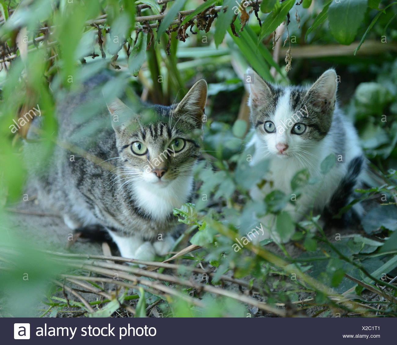 Cat In Backyard kitten and adult cat in backyard stock photo: 276860081 - alamy