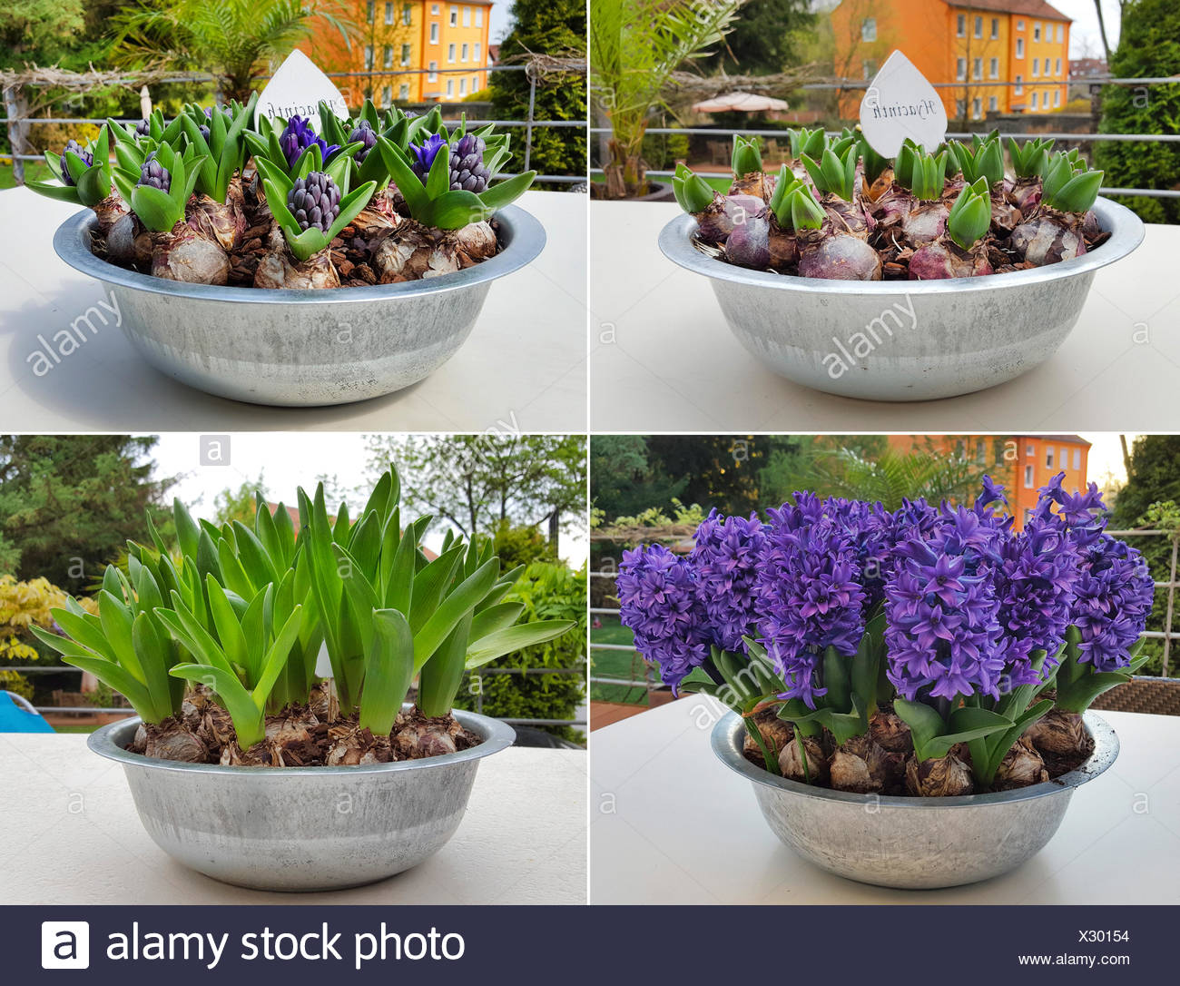 balkon blumen stock photos balkon blumen stock images alamy. Black Bedroom Furniture Sets. Home Design Ideas