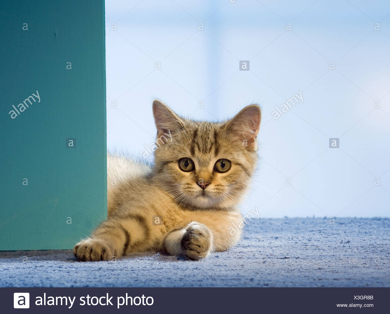 Pets Corner Stock Photos