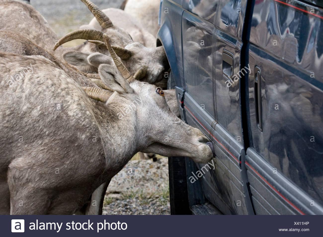 Parks big deer lick images 529