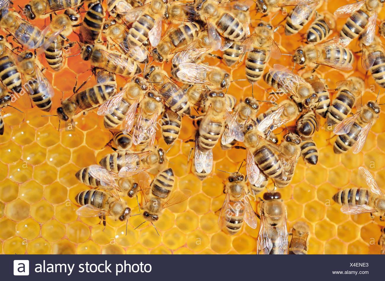 how to keep honeycomb fresh