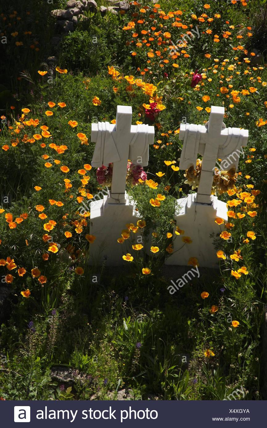 Spain Ex Diaeresis Dura Cemetery Flower Meadow Marble Crosses