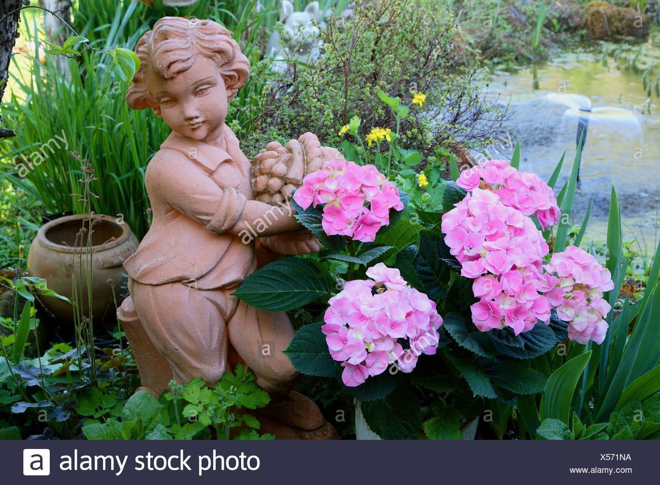 Hortensia Common Hydrangea Hydrangea Macrophylla Boy Made From