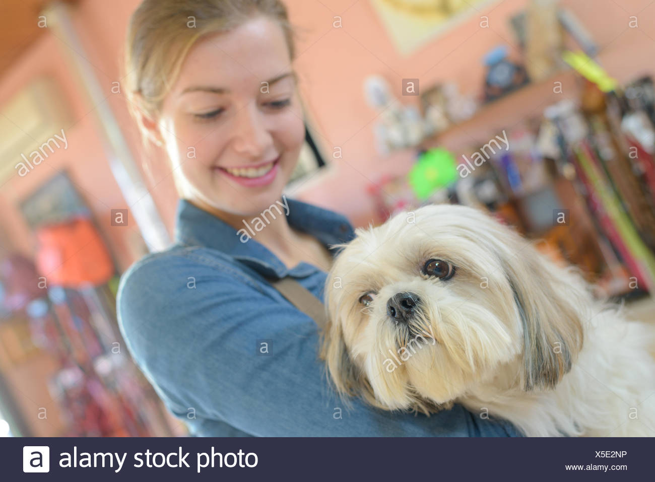 Cut Dog And Vet Assistant Stock Photo 278748674 Alamy