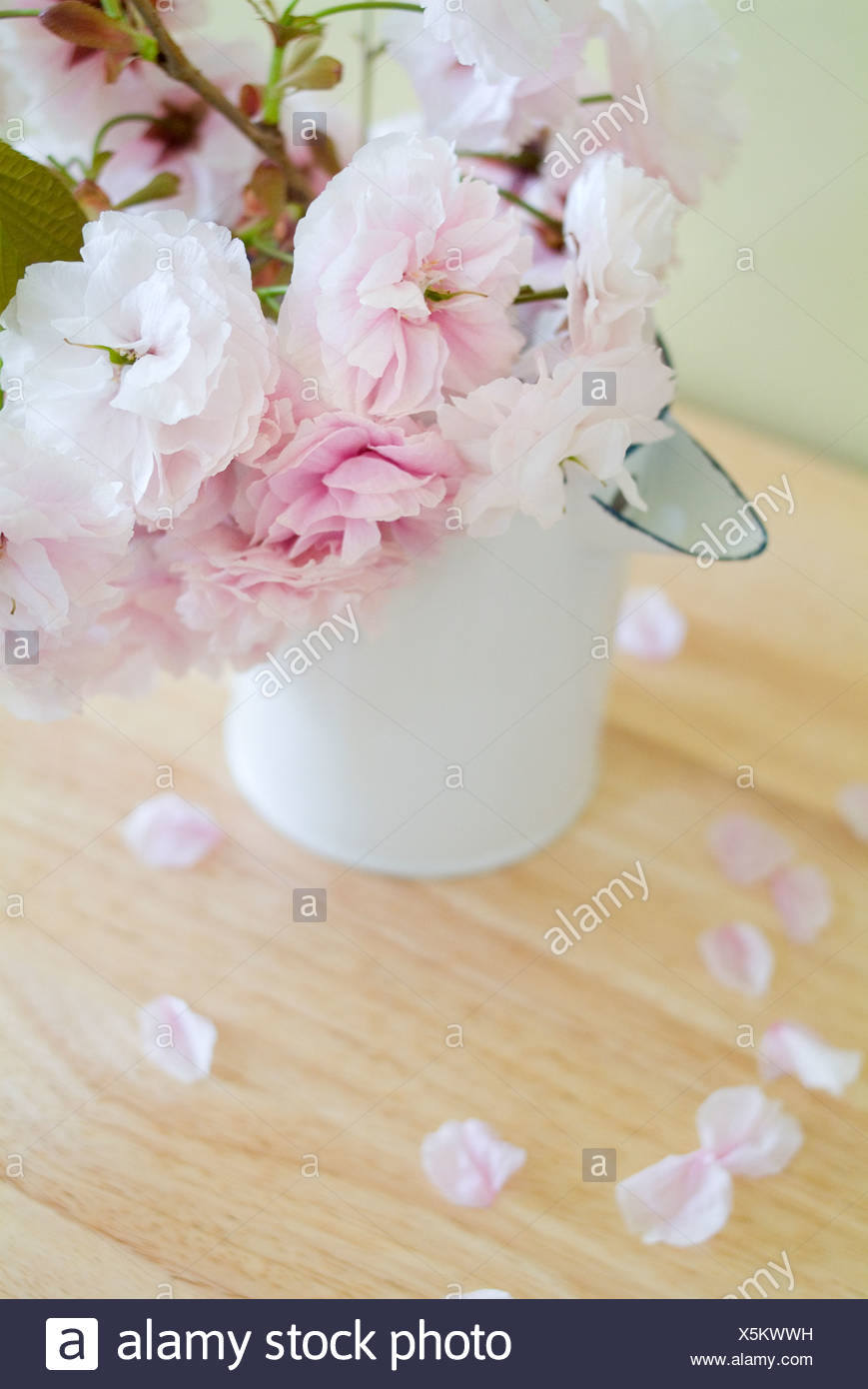 flower vase gravel with Japanese Cherry Tree on Diy Succulent Terrarium besides Sensational Shoe Planters besides Diy Ideas How To Make Fairy Garden moreover Flowery Fields moreover Delightful Pea Gravel Patio Decorating Ideas.