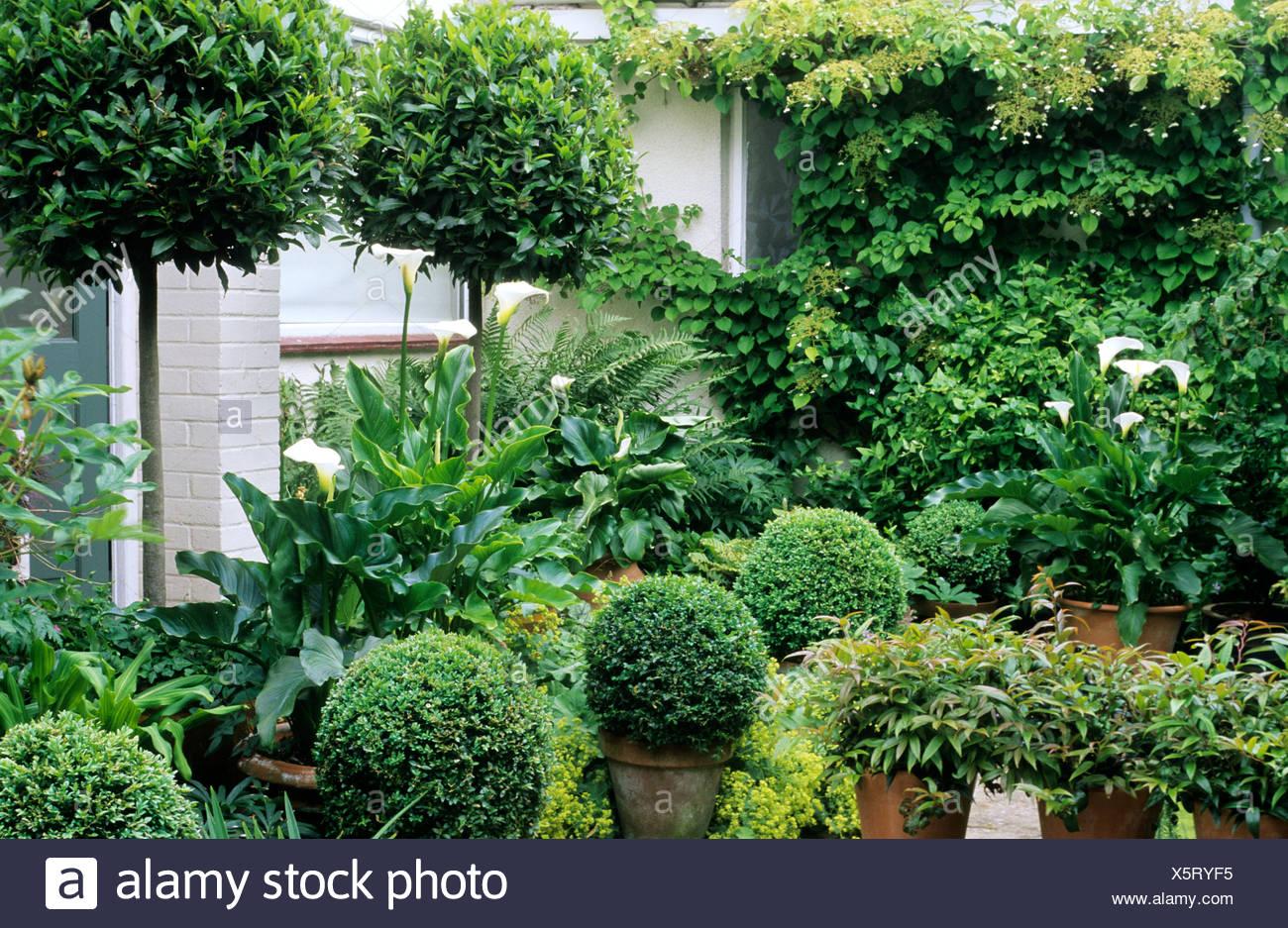 Green And White Topiary Garden Box Standard Bay Balls