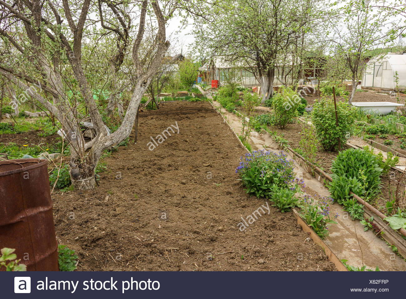 Allotment garden path Stock Photo: 279110154 - Alamy