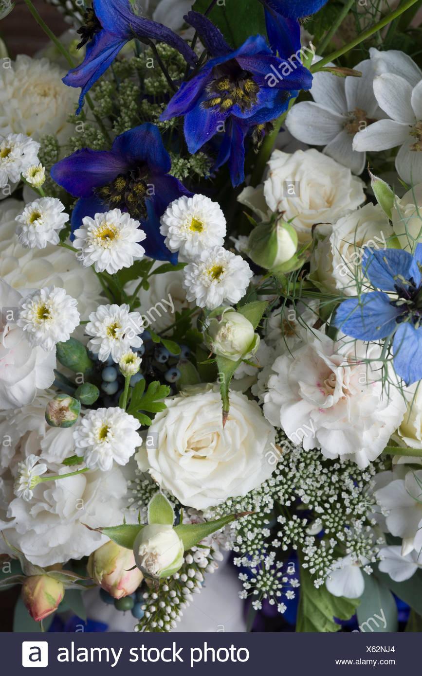 Delphinium pagan purples delphinium blue jay phlox paniculata david delphinium pagan purples delphinium blue jay phlox paniculata david white roses nigella damascena and carnation mightylinksfo