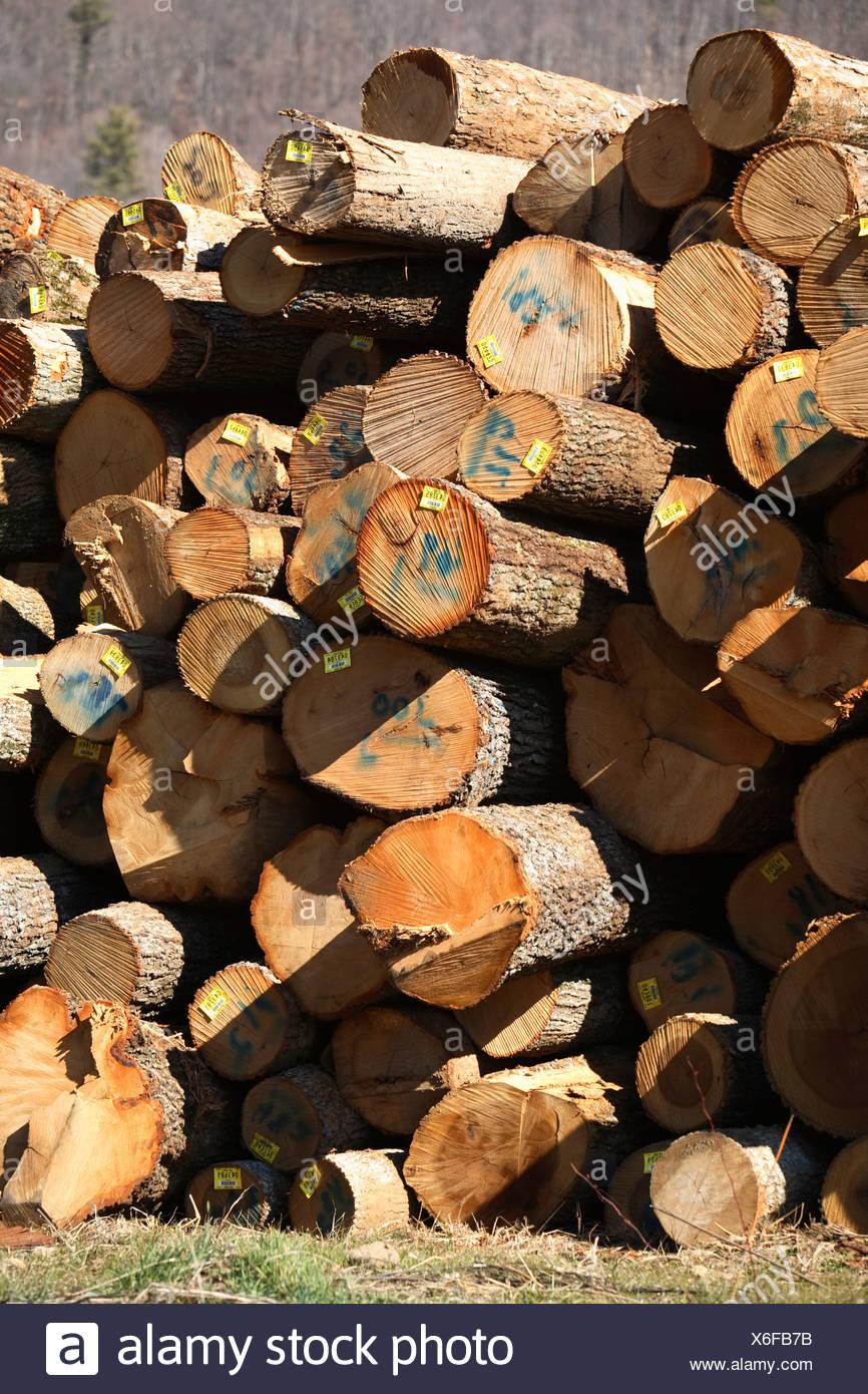 stack of hardwood logs near erwin tn await a trip to lumber mill