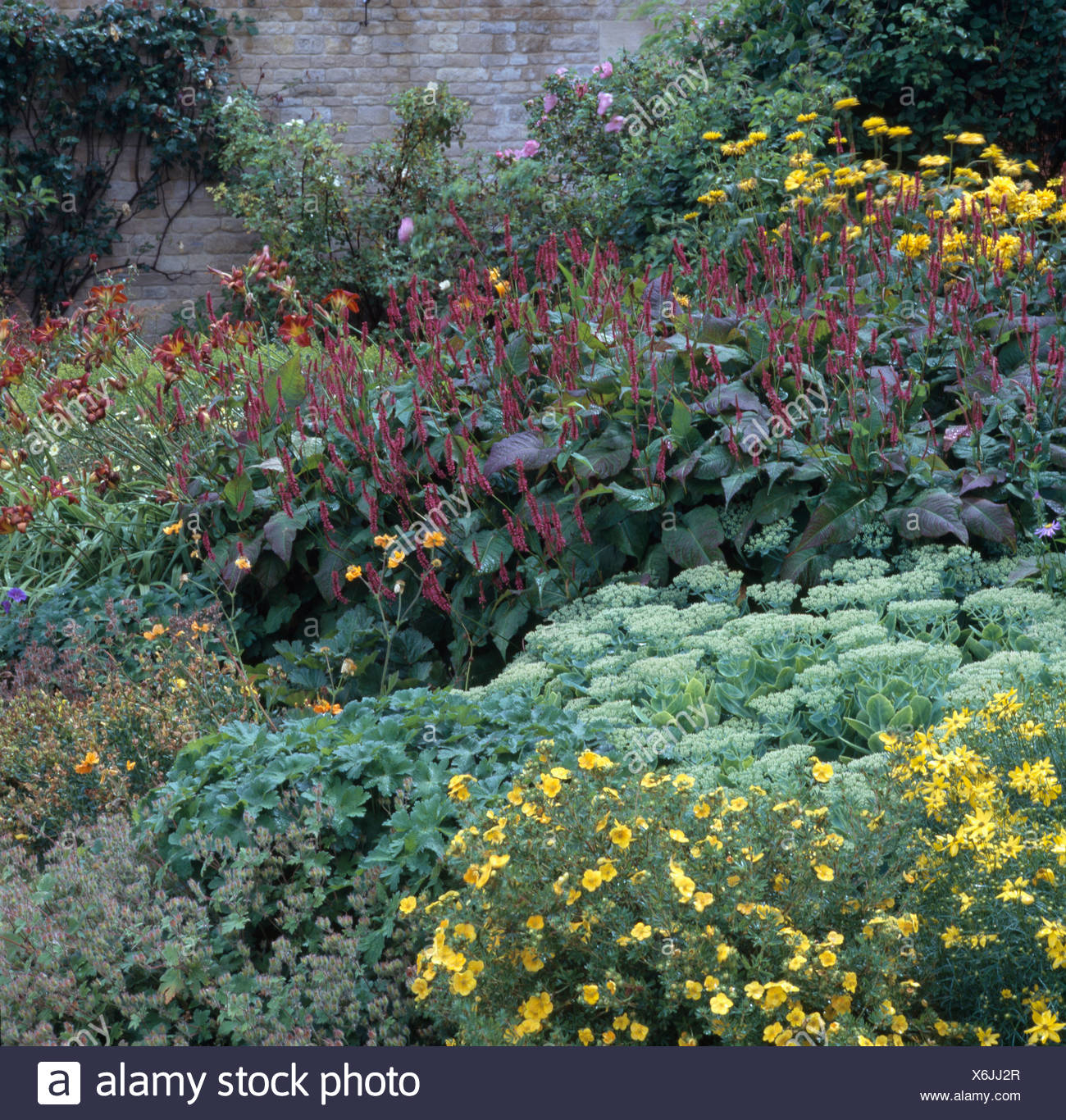 Colourful Perennials Growing In Summer Flowering Borders In Large