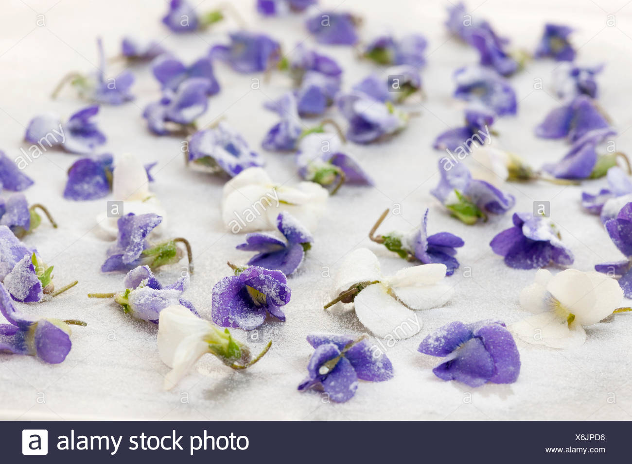 Candied Sugared Violet Flowers Drying On Parchment Paper Stock Photo