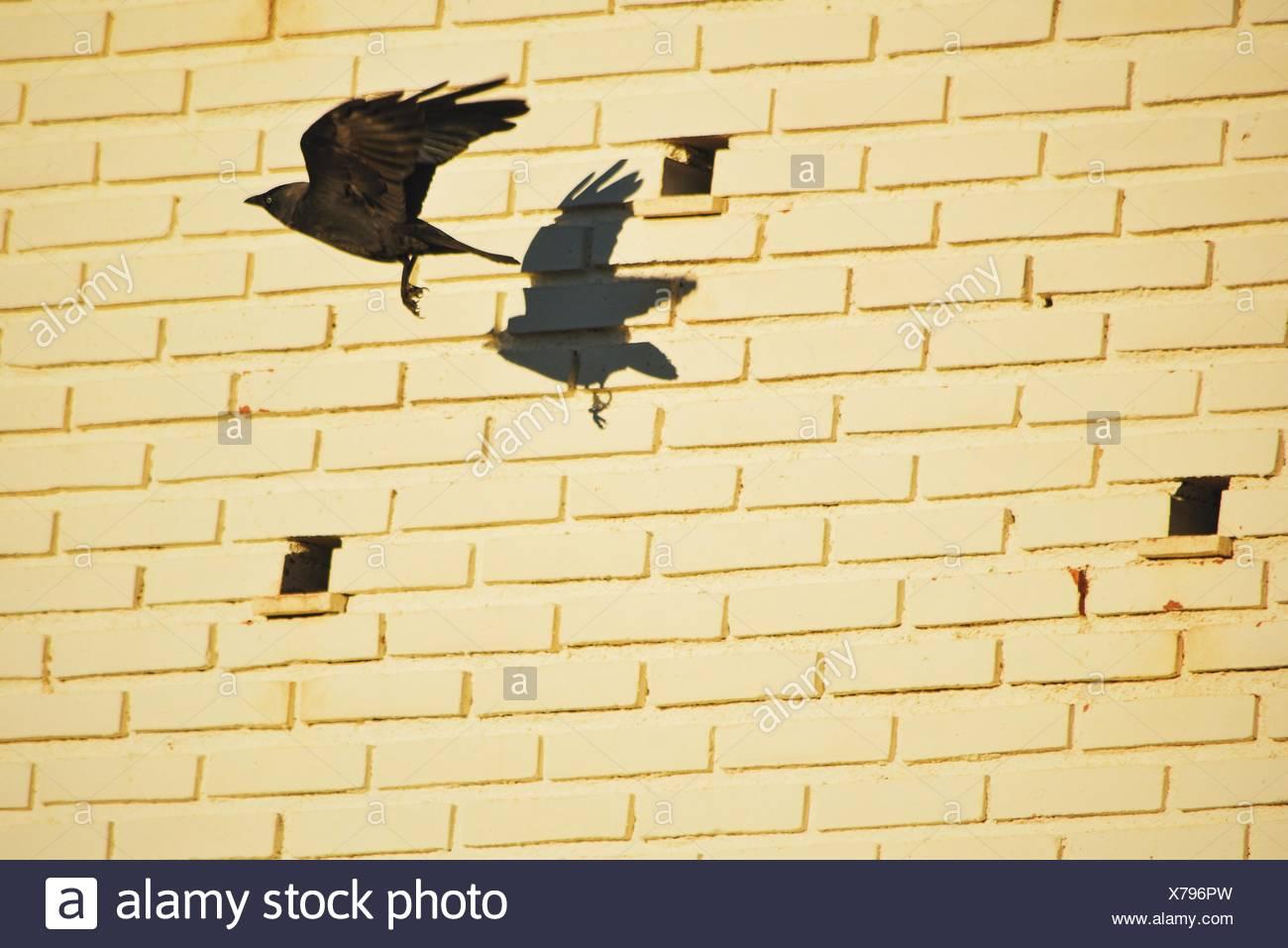 Delighted Birds In Flight Wall Decor Ideas - The Wall Art ...