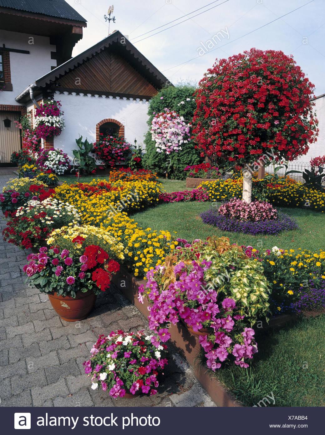 France, Alsace, Residential House, Garden, Floral Decoration, Europe, La  France, République Française, Alsace, Alsace, Front Garden, Nature,  Flowers, Garden ...