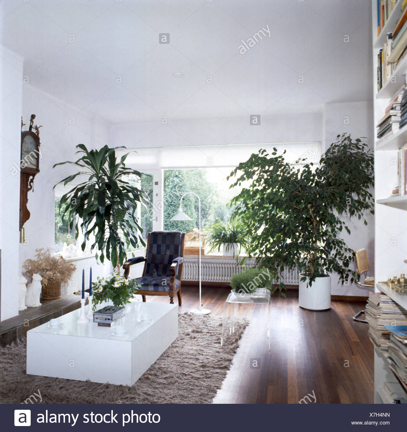 Tall Green Plants In A Seventies Living Room With A White Melamine Block  Table On A Shag Pile Rug