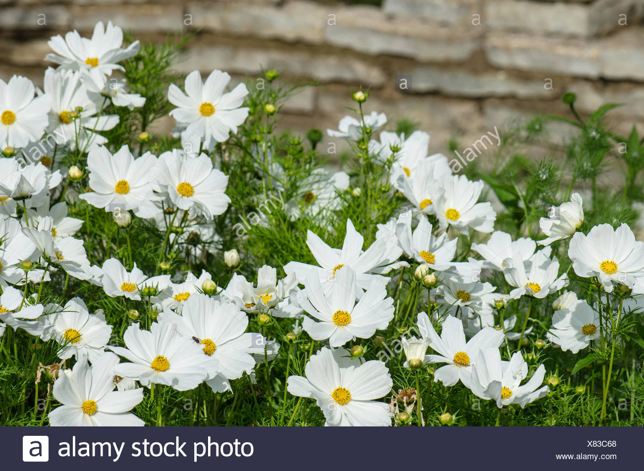 White Flower On A Bed With Other Plants Close Up Stock Photo