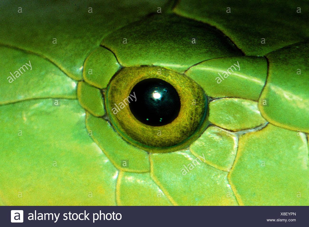 snake eye stock photo 280612269 alamy