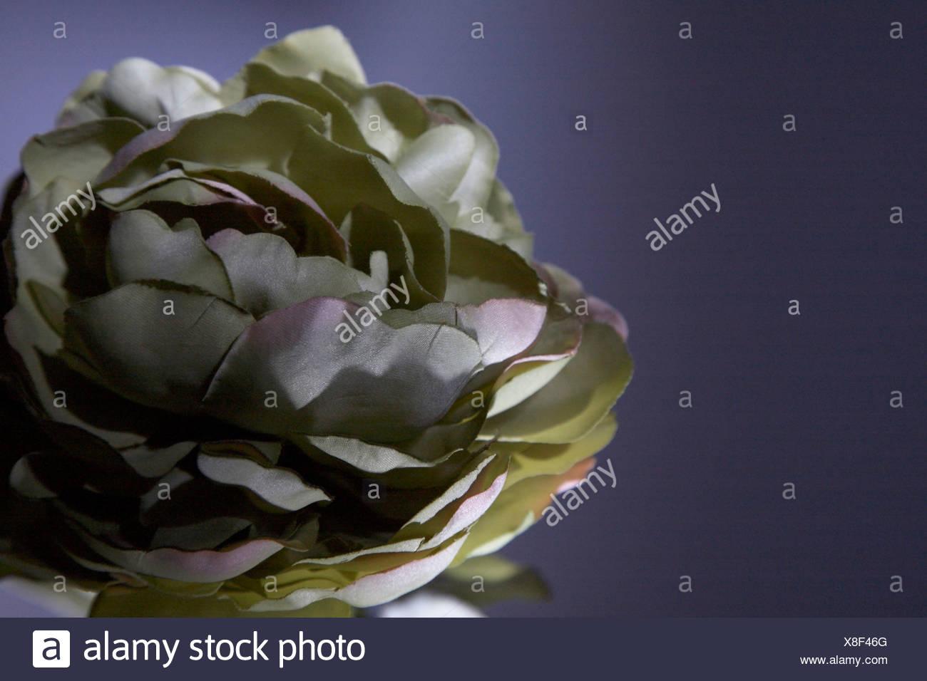 Silk Flower On Dark Background Stock Photo 280615736 Alamy