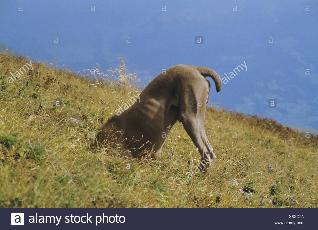 The Black Dog Scarborough