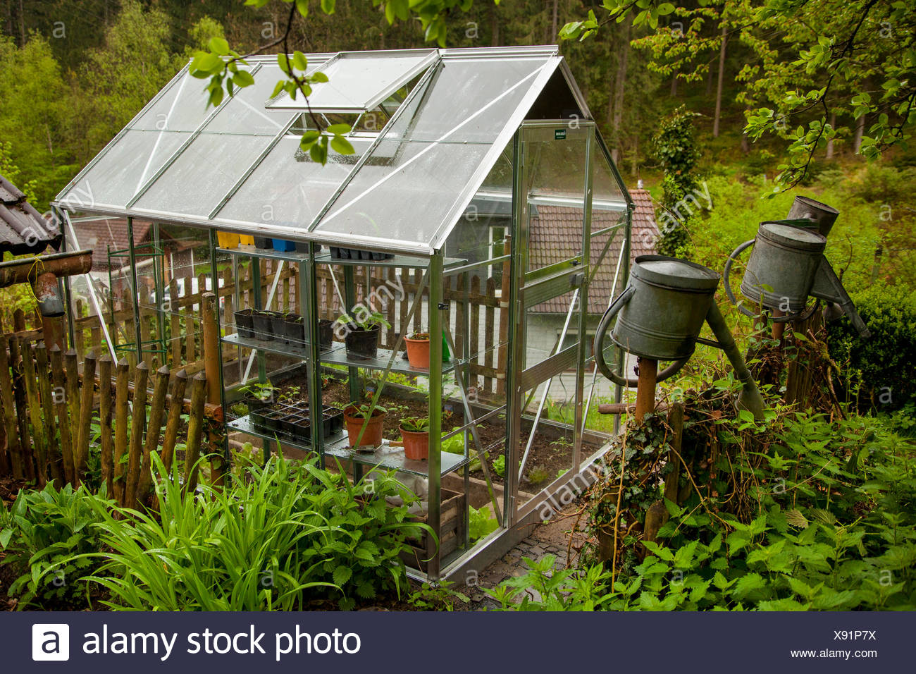 greenhouse for vegetable growing in the garden, Germany, Rhineland ...