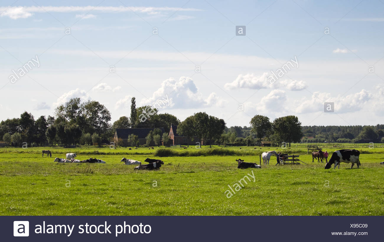 agriculture farming holland netherlands country dutch