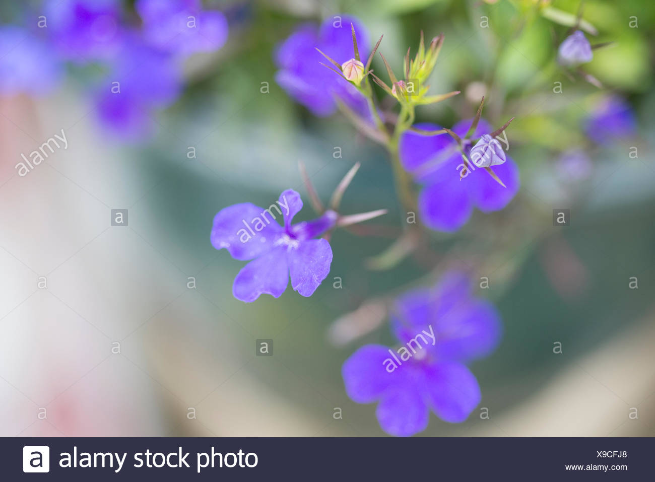 Small Purple Flowers Stock Photo 281173488 Alamy