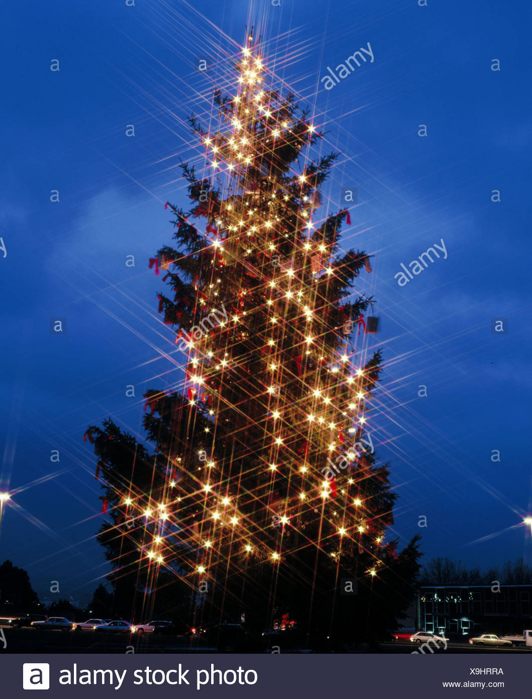 outside christmas tree germany europe friedrichs place kassel lights star grid filter christmas
