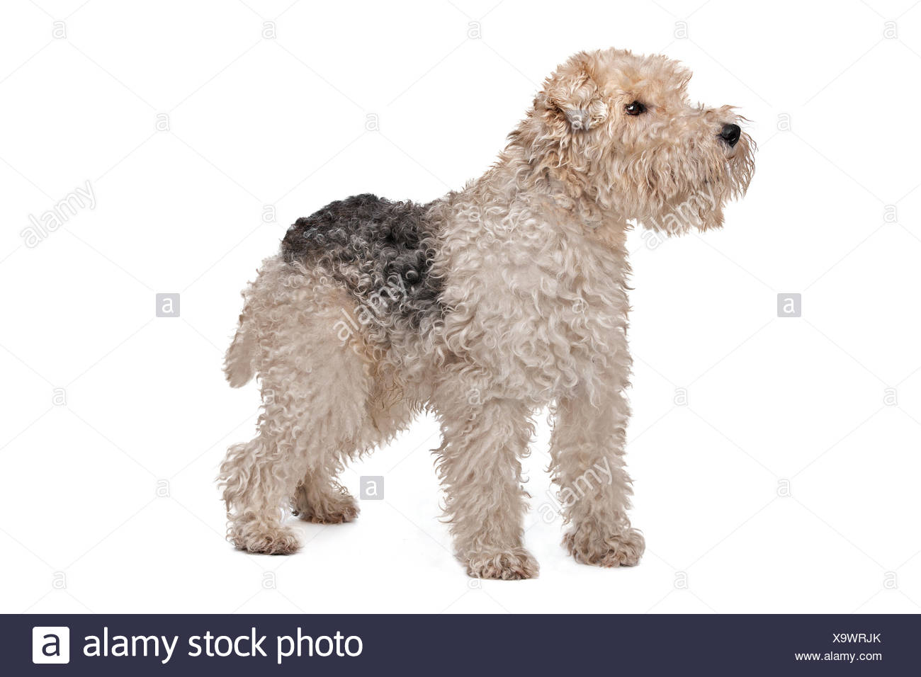 Modern Wire Hair Fox Terrier Adoption Collection - Electrical and ...