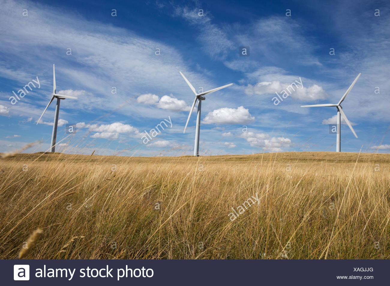 Alternative choice stock photos alternative choice stock for Wind mobile family plan