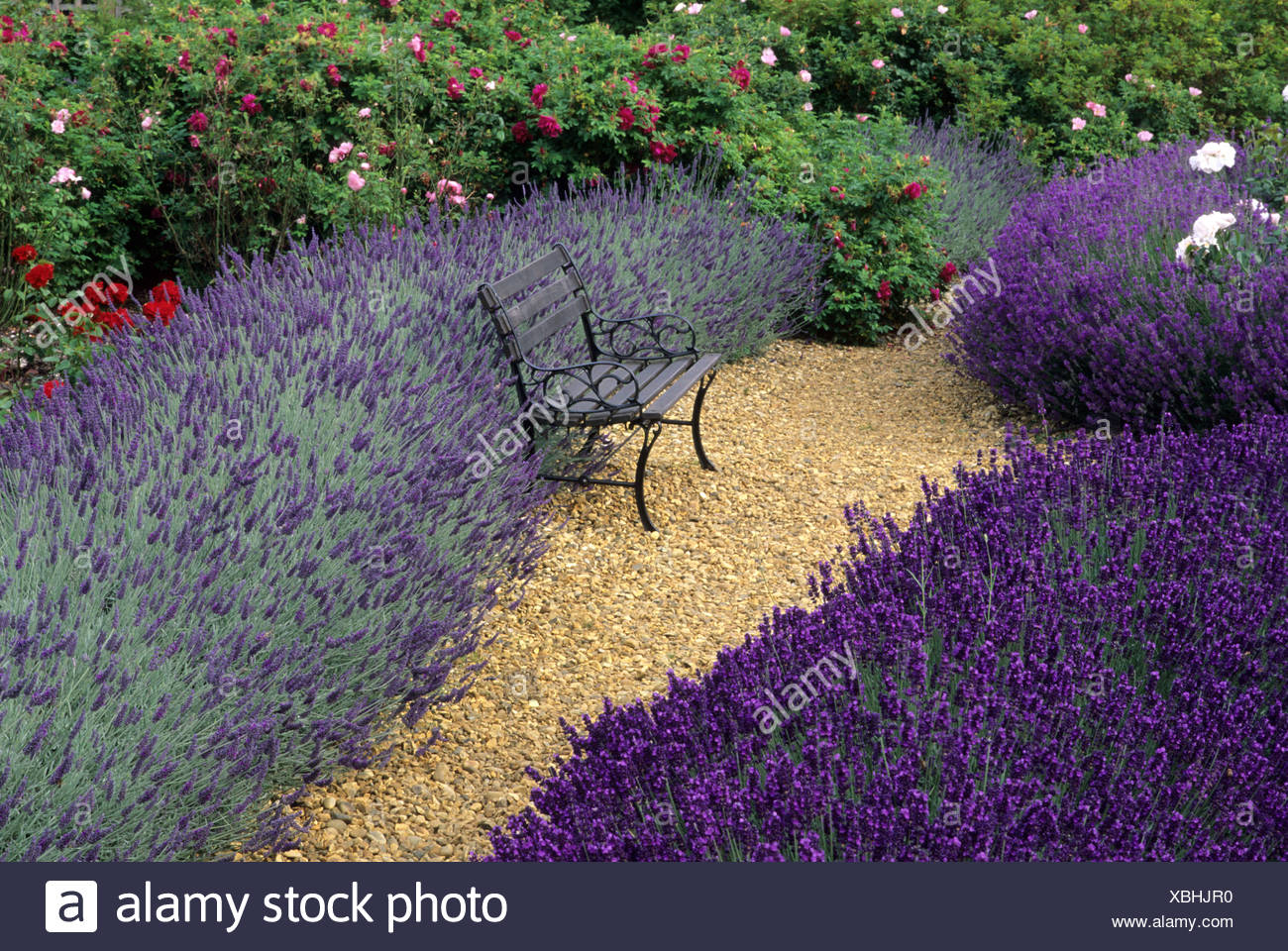 Lavandula Angustifolia U0027Imperial Gemu0027 And Lavandula Angustifolia U0027Sawyersu0027,  Garden Bench, Furniture, Roses, Gravel Path