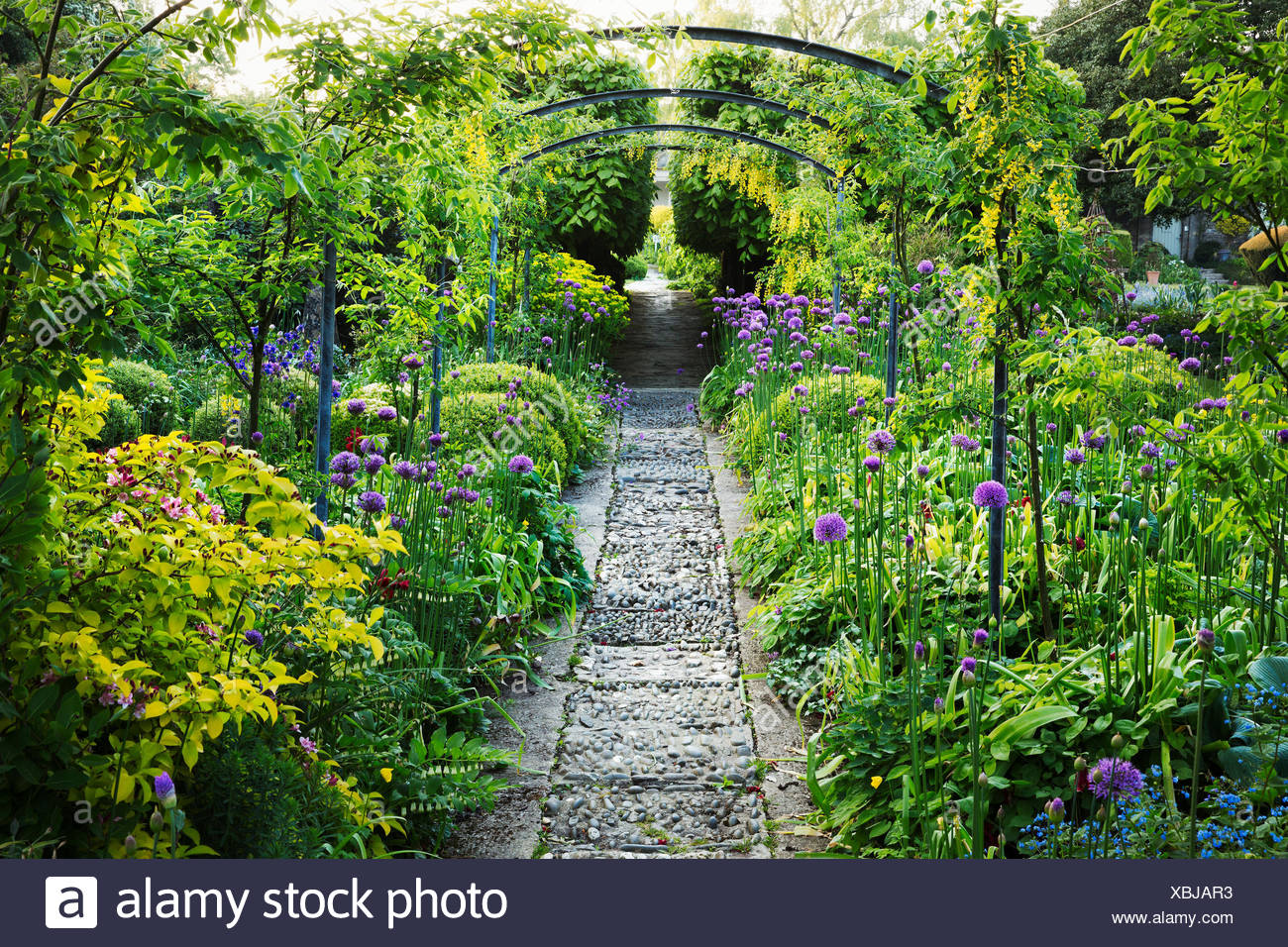 Mature Plants And Shrubs In An English Garden, Pathway And Pergola.  Cotswold Stone, Purple Aliums Flowering. Glouchestershire Hotel Gardens