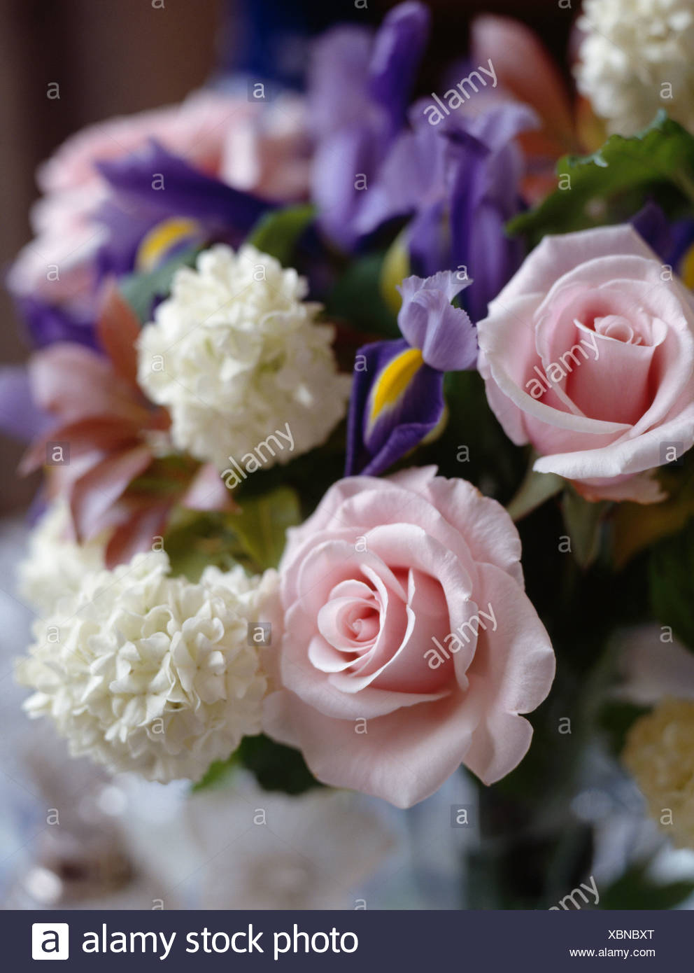 Still Life Of Pink Roses With Blue Irises And White Viburnum Opulus