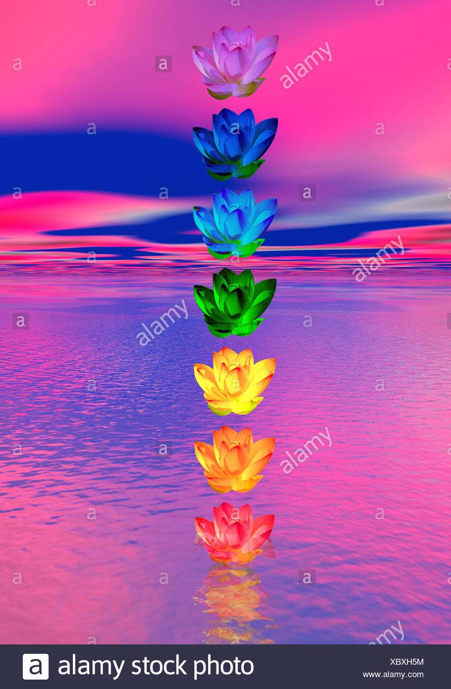 Chakra Colors Of Lily Flower Stock Photo 282711344 Alamy