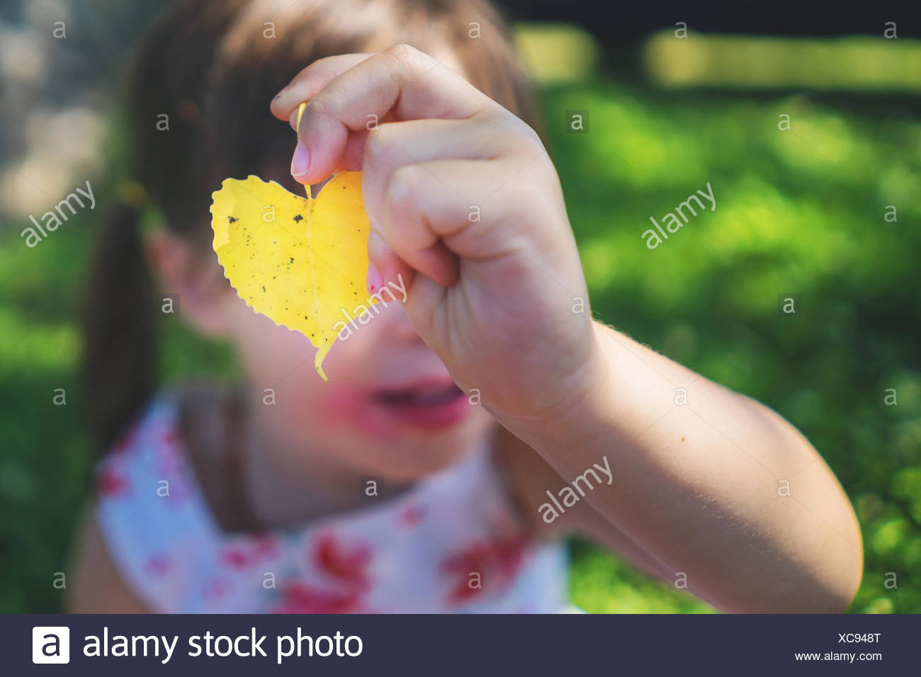 Heart Shaped Leaf In Hand Stock Photos & Heart Shaped Leaf In Hand ...