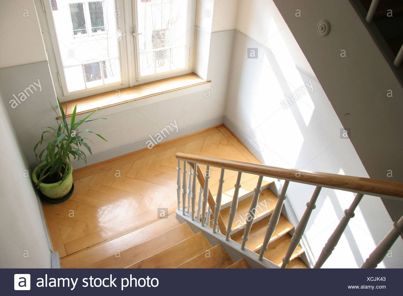 Bottom Ground Grounds Home House Houses Inside Plant Railing Stair  Staircase Stairs Window Wood Wooden